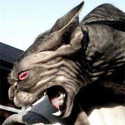 evil cat demon