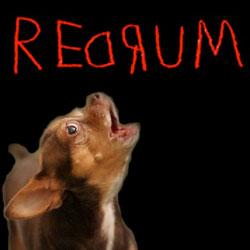chihuahua barking redrum